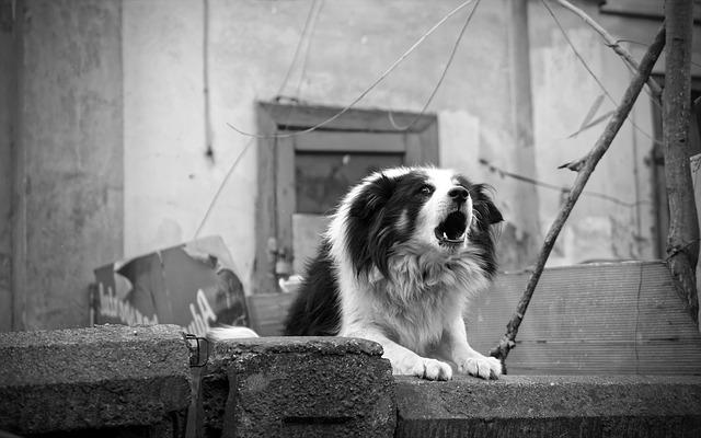Да ли постоје опасне расе паса?